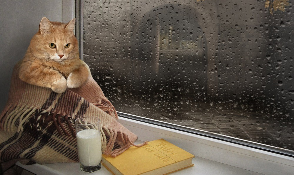 Cats in Books: Our Top Fictional Felines